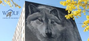 Wolf capital of the world manitoba image